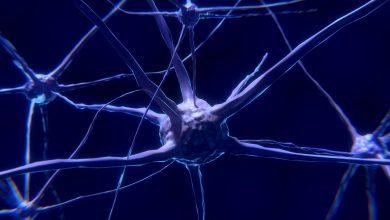 """בכל תהליך שבו אנחנו לומדים משהו חדש מתרחש בתוך המוח שלנו תהליך מדהים הנקרא """"נוירו-ג'נסיס"""" שהגדרתו הפשוטה היא בנייה של תאי מוח חדשים"""